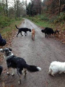 Hundeschule Zimmermann011