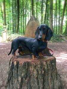 Hundeschule Zimmermann018