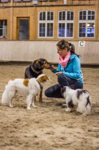 Hundeschule Zimmernann009