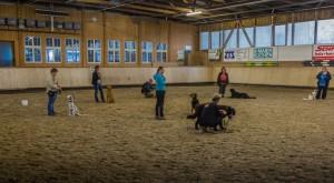 Hundeschule Zimmernann in Bahlingen