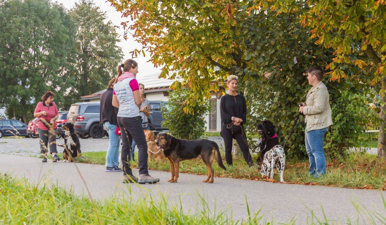 Gruppe mit Hunden und Anna