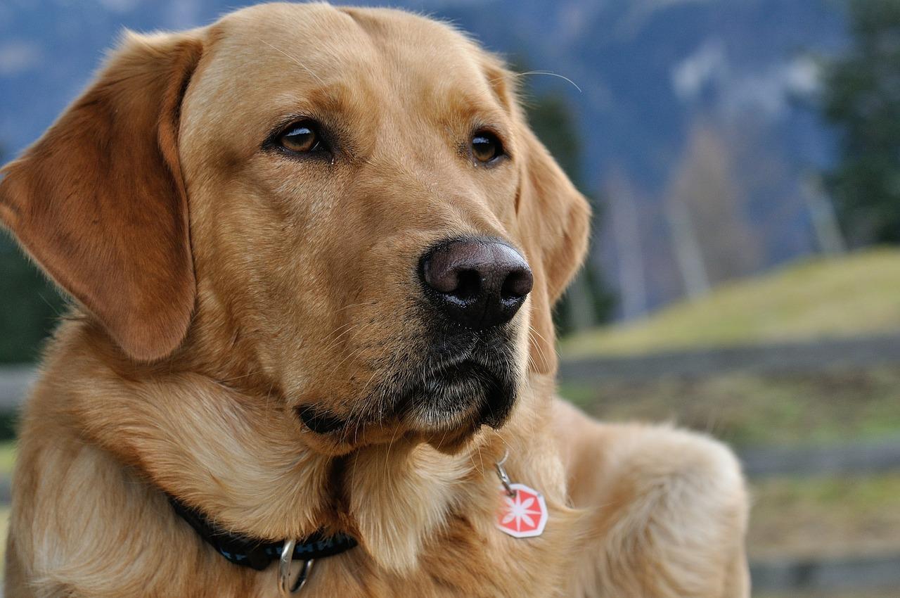 Hundeschule Zimmermann